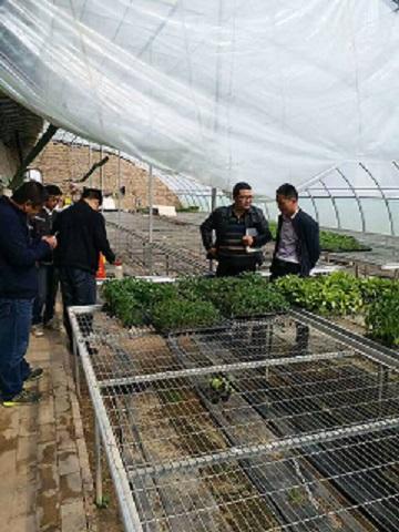 甘州区种子管理局开展2017年种苗基地转基因检测工作