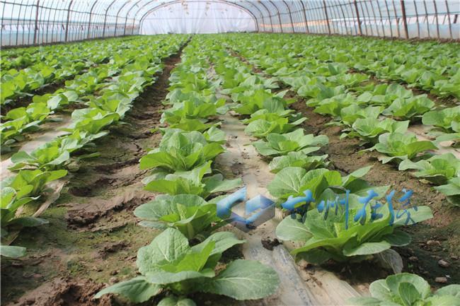甘州区党寨镇5000亩设施蔬菜长势喜人