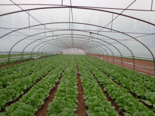 甘州区靖安乡调整产业结构加快高原夏菜发展