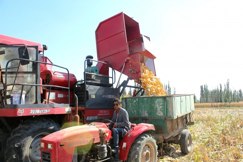 甘州区碱滩镇2.1万亩商品玉米全面进入收获期