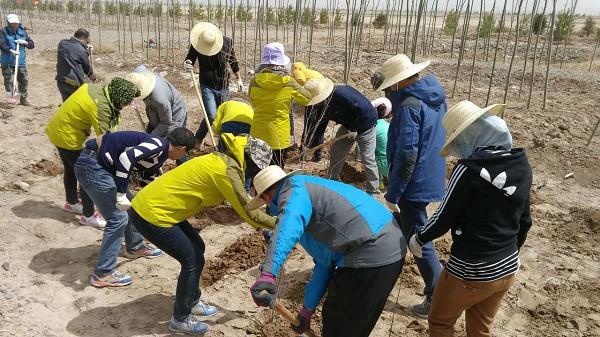 甘州区地方税务局认真开展义务植树活动