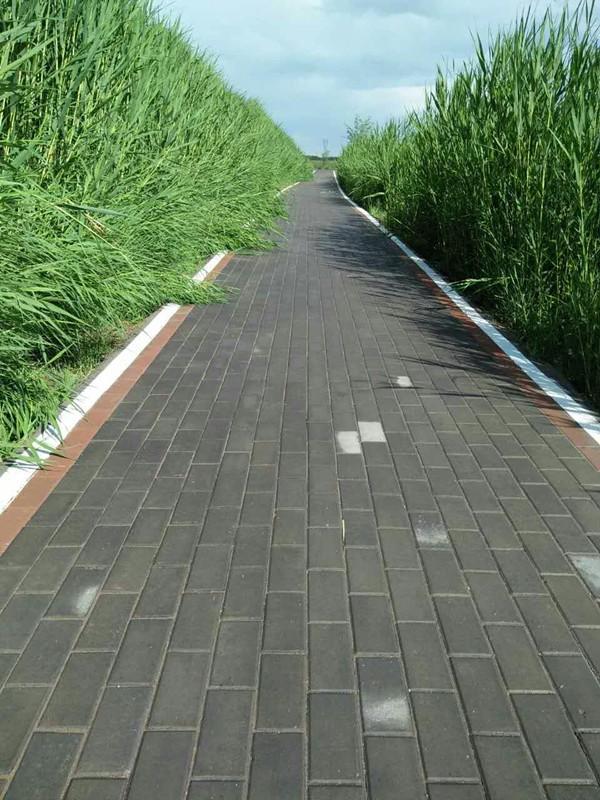 张掖国家湿地公园提升项目积极开展