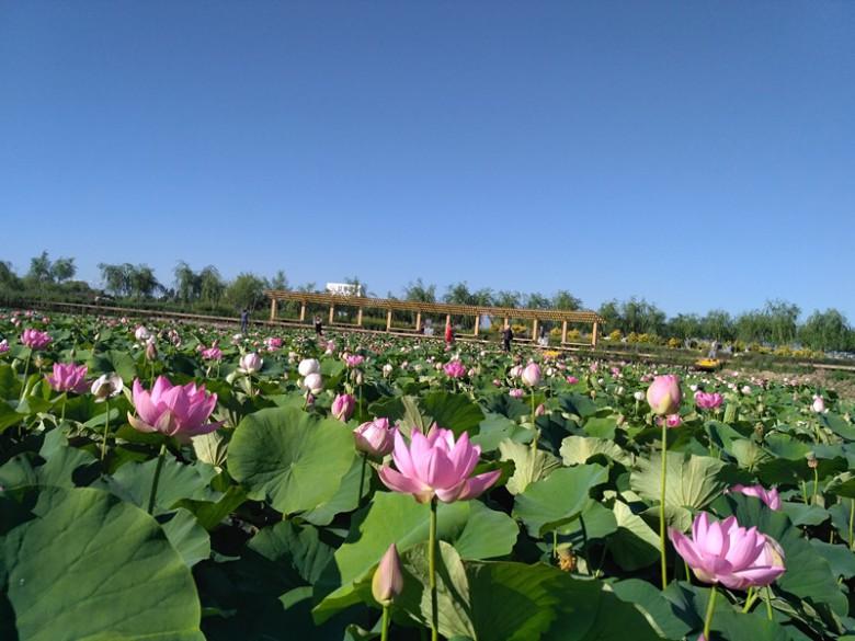 张掖国家湿地公园令人流连忘返