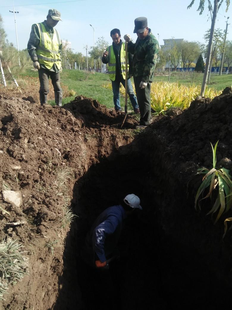 甘州区园林绿化局紧急修复灌水管线