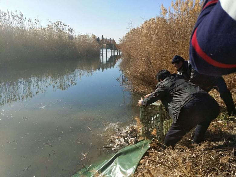 甘州区鱼类增殖放流活动在张掖国家湿地公园举行