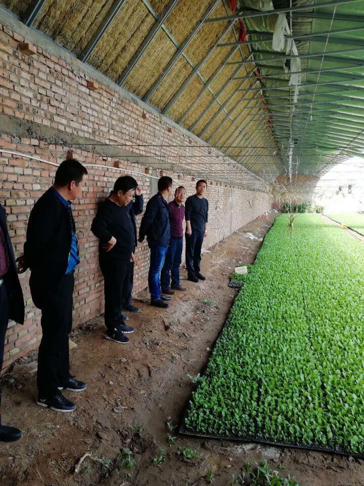 甘州区加大出口食品原料种植场基地备案