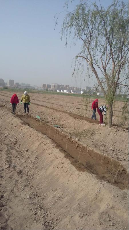 甘州区黑河湿地自然保护区居民转移转产项目新墩镇植被恢复工程初见成效