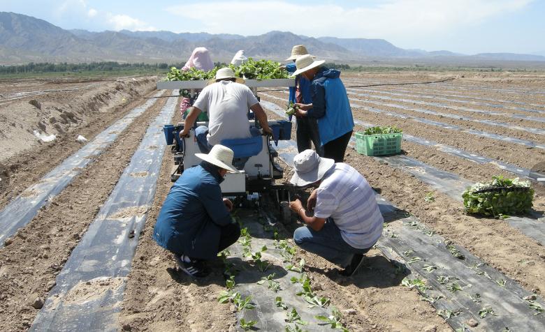 甘州区引进一台自走式蔬菜移栽机