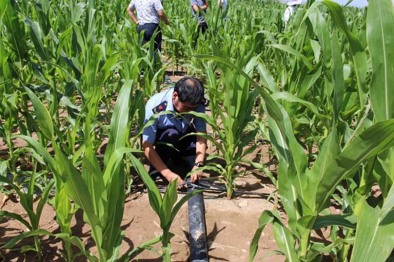 甘州区工商质监局成功调处一起因滴灌带存在问题影响农作物生长的消费投诉