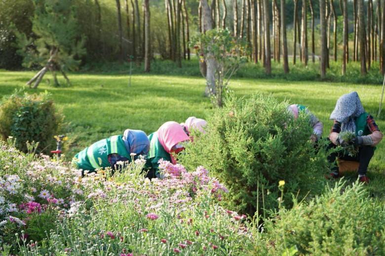 甘州区园林绿化局 认真做好芦水湾生态景区节前绿化工作