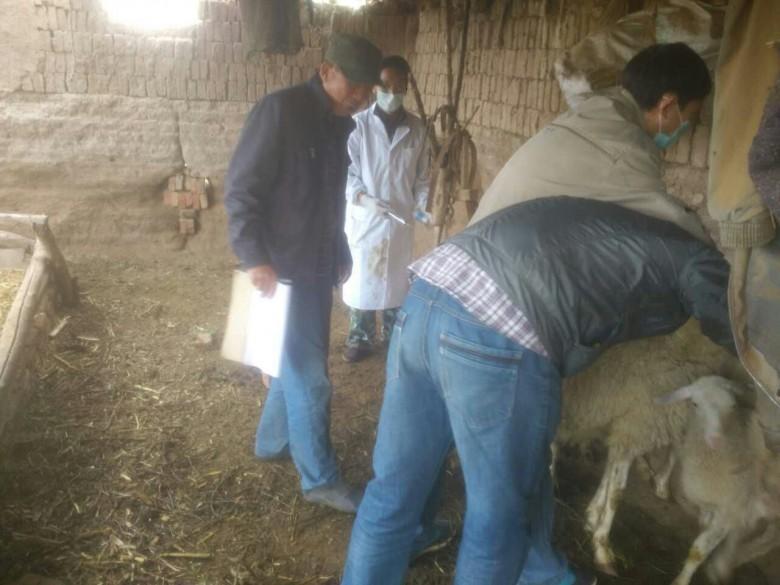 三闸镇秋季重大动物疫病防控 工作全面展开
