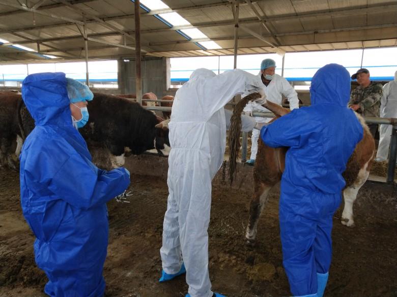 甘州区三闸镇认真开展秋季动物疫情监测工作