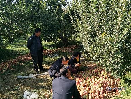 甘州区农业局加大植物疫情检疫工作确保果品市场安全