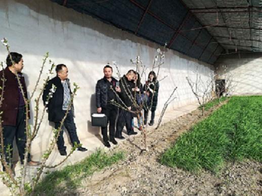 甘州区农业局开展韭菜质量安全专项检查