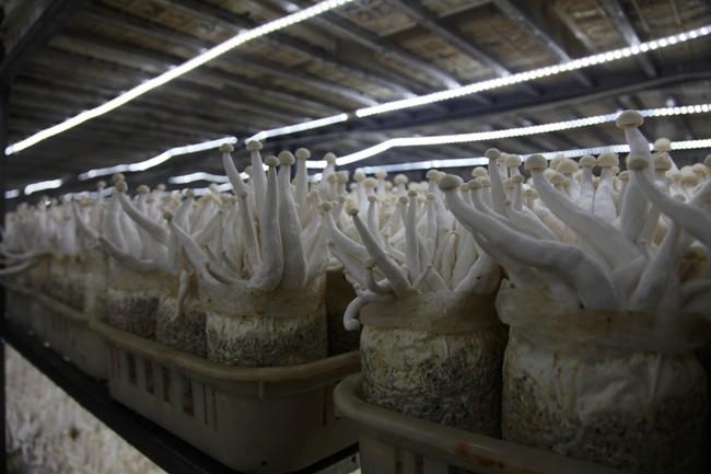 小菇兴大业——张掖善之荣现代农业有限公司发展纪略
