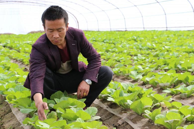 甘州梁家墩镇蔬菜标准园助理农民增收