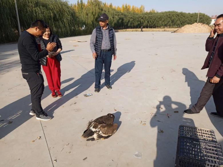 甘州区野生动物保护管理站草原雕救护