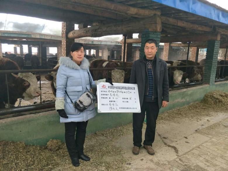 """梁家墩镇:能繁母牛保险为养殖户系上""""安全带"""""""