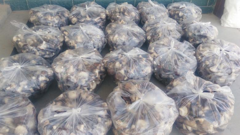 龙渠乡食用菌日光温室标准化生产示范基地建成投入生产