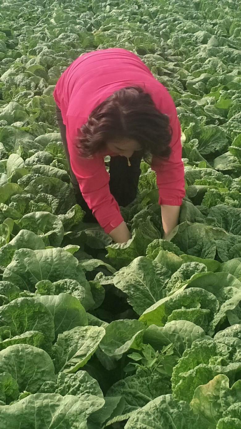 甘州区早春拱棚蔬菜取得好效益
